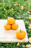 Orange on wooden board with grass outdoor. Orange on wooden texture board with grass outdoor stock image