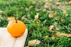 Orange on wooden board with grass outdoor. Orange on wooden texture board with grass outdoor stock photo