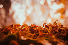 Orange and yellow autumn leaves close up Stock Photography