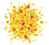 Orange and yellow autumn leaves vector splash Stock Photo