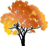 Orange and yellow autumn tree on white Royalty Free Stock Photo