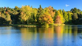 Autumn trees and their golden reflections in a lake stock photography
