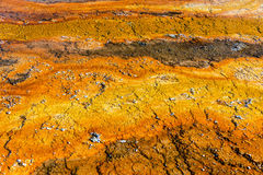 Orange and Yellow Bacteria Mat. Colorful orange and yellow bacteria mat in West Thumb Geyser Basin in Yellowstone National Park Royalty Free Stock Images