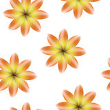 Orange yellow blossoms, seamless periodic floral pattern,  flowers, transparent background. Orange yellow blossoms, seamless periodic floral pattern,  flowers Royalty Free Stock Photography