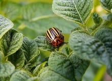 Orange and Yellow Bug on Leaf Stock Image