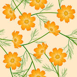 Orange Yellow Cosmos Flower on Ivory Beige Background. Vector Illustration Royalty Free Stock Photo