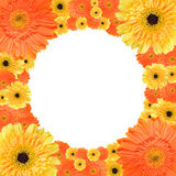Orange and yellow daisy circular frame Royalty Free Stock Images