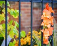 orange yellow för blomma Arkivfoto