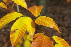Orange and Yellow fall foliage royalty free stock photography