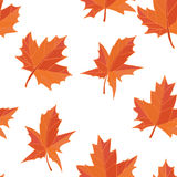 Orange yellow fallen autumn leaves isolated on white background Royalty Free Stock Image