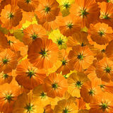 Orange and yellow flower flurry background Stock Image