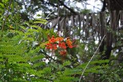 Orange and yellow flower among greenery Stock Images