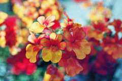 Orange and yellow flowers. Group of small orange and yellow flowers on blue background Stock Photo