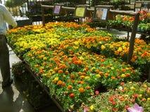 Orange and Yellow Flowers, Botanical Garden Centers, Claremont, California, USA. Orange and Yellow Flowers at the Botanical Garden Centers, Claremont, California stock photos