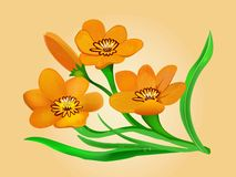 Orange and yellow flowers Sparaxis Royalty Free Stock Image
