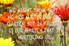Orange and yellow gazania flowers on a blurred background with positive gardening quote. Orange and yellow gazania flowers on a blurred background with gardening stock image