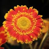 Orange-yellow herbarium. Big bright orange-yellow herbarium royalty free stock photos
