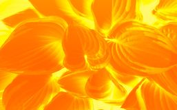 Orange and Yellow abstract leaf pattern. Stock Images
