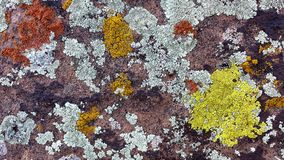 Orange, Yellow, and Light Green Lichen Patterns on a Red Sandstone Rock in Southern Utah. Orange, Yellow, and Light Green Lichen on a Red Sandstone Rock in royalty free stock images