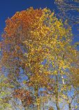 Orange and Yellow Mix in the Fall Royalty Free Stock Photography