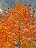Orange and Yellow Mix of Fall Stock Photography