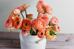 Orange and yellow persian buttercup flowers. ranunculus in gray vintage can, copy space. Royalty Free Stock Photos