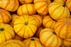 Orange and yellow pumpkins. Closeup of random pile of recently harvested orange and yellow Tiger pumpkins Royalty Free Stock Photo