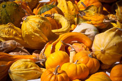 Orange and yellow pumpkins in a market Stock Photography
