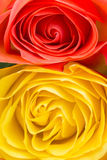 Orange and yellow rose power Royalty Free Stock Images