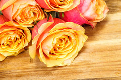 Orange yellow roses Royalty Free Stock Photography