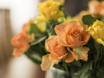 Orange and yellow roses. With a blurry background Royalty Free Stock Photos