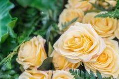 Orange yellow roses Royalty Free Stock Photos