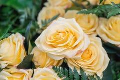 Orange yellow roses Stock Photo