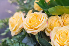 Orange yellow roses. Some orange yellow roses in the garden royalty free stock photo