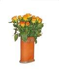 Orange yellow roses Stock Image