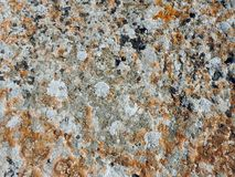 Orange and yellow round lichens on a light grey stone Stock Images