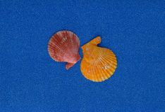 Summer composition with shells on blue glitter background royalty free stock image