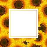 Orange Yellow Sunflower Banner Card Border isolated on White Background. Vector Illustration.  stock illustration