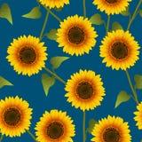 Orange Yellow Sunflower on Indigo Blue Background. Vector Illustration.  stock illustration