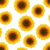 Orange Yellow Sunflower Seamless on White Background. Vector Illustration.  stock illustration