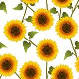Orange Yellow Sunflower on White Background. Vector Illustration.  royalty free illustration