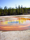 Orange and Yellow thermal pool Yellowstone Royalty Free Stock Images