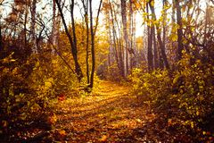 Orange yellow tree leaf forest autumn beauty nature stock photo