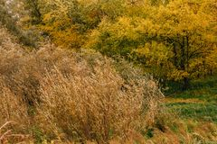 Orange yellow tree leaf forest autumn beauty nature stock photography
