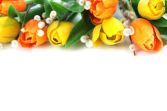Orange and yellow tulips border Stock Photo