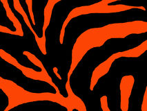 Orange Zebra stripes Royalty Free Stock Image