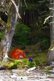 Orange Zelt warf herein den moosigen Schatten nahe dem Ufer im Regen-Wald des Großen Wagens, BC Lizenzfreies Stockbild