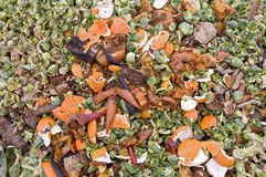 Orange zest and sprouts leaves Royalty Free Stock Photography
