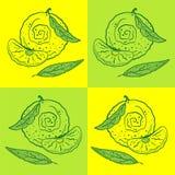 Orange zum gelbgrünen Hintergrund lizenzfreie abbildung