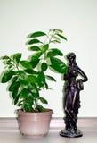 Orange Zwerg gewachsen in den Töpfen im Haus Statue des Knochens Wei?er Hintergrund stockbild